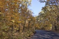 Vergankelijke bosweg op een zonnige Oktober-middag stock foto