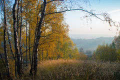 Verge of autumn forest Royalty Free Stock Photos