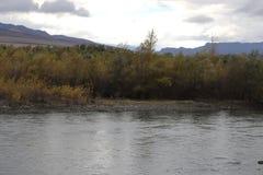 Vergeeld bos dichtbij rivier in Georgië royalty-vrije stock foto's