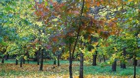 Vergeelde bladeren op de bomen Royalty-vrije Stock Foto's