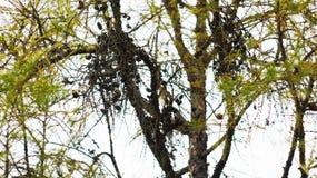 Vergeelde bladeren op de bomen Royalty-vrije Stock Foto