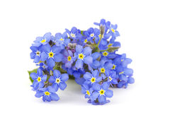 Vergeet me niet bloemen stock foto's