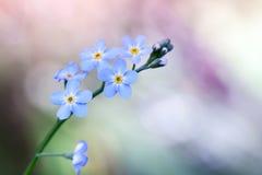 Vergeet me niet bloemen op kleurrijke achtergrond royalty-vrije stock fotografie