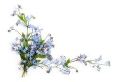 Vergeet-mij-nietje (bloemenornament stock fotografie