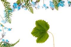Vergeet-mij-nietje (bloemenornament royalty-vrije stock fotografie