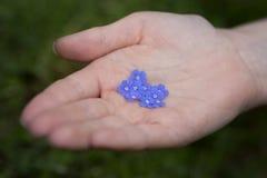 Vergeet-mij-nietjebloemen in een Child& x27; s Hand Royalty-vrije Stock Afbeelding