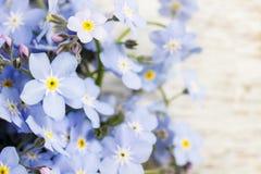 Vergeet-mij-nietjebloemen op houten achtergrond Stock Fotografie