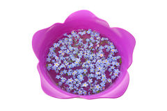 Vergeet-mij-nietjes in Tulip Bowl royalty-vrije stock foto