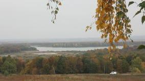 Vergelende bladeren van berk stock footage