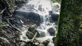 Övergående träd nära vattenfallet lager videofilmer