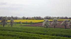 Verger avec les arbres fruitiers de floraison Image stock