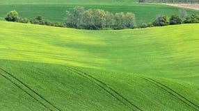 Verger d'arbres dans les domaines verts Image libre de droits
