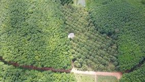 Verger d'arbres de durian et plantation d'arbres en caoutchouc banque de vidéos