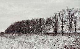 Verger d'hiver dans la campagne Photo libre de droits