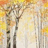 Verger de bouleau dans le temps d'automne Image libre de droits