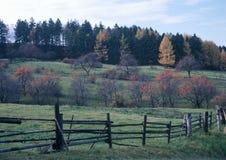 Verger de cerise en automne Photographie stock libre de droits