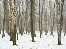 Verger de février dans le brouillard et la neige Photographie stock libre de droits