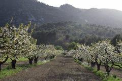verger de floraison de l'arbre Oppede-le-vieux fruitier photographie stock