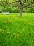 Verger de jardin, Angleterre Photographie stock libre de droits