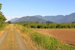 Verger de noisette et environs naturels Image libre de droits