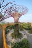 Verger de Supertree à Singapour Photographie stock