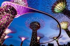 Verger de Supertree à Singapour Image stock