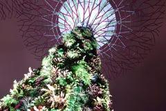 Verger de Supertree Image libre de droits