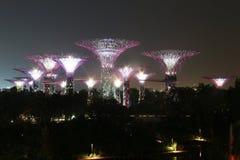 Verger de Supertree de nuit à Singapour Photographie stock libre de droits