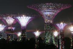 Verger de Supertree de nuit à Singapour Images libres de droits