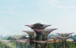 Verger de Supertree, jardins par la baie Singapour Images libres de droits