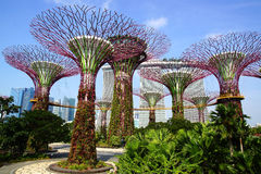 Verger de Supertree, Singapour Photos stock