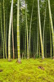 Verger en bambou Images stock