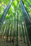 Verger en bambou d'Arashiyama, Kyoto, Japon image libre de droits