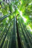 Verger en bambou d'Arashiyama, Kyoto, Japon images libres de droits