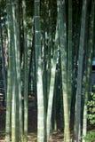 Verger en bambou luxuriant vert animé Images stock