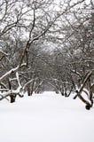 Verger en hiver Photographie stock libre de droits