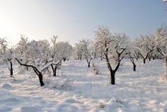 Verger en hiver Photos libres de droits