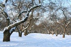 Verger en hiver. Photos libres de droits