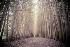 Verger foncé de forêt avec l'élevage d'arbres Photo libre de droits