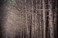 Verger foncé de forêt avec l'élevage d'arbres Photographie stock