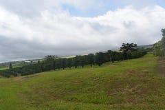 Verger sur une colline de roulement avec la nébulosité lourde photo stock