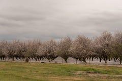 Vergers de San Joaquin Valley Photo libre de droits