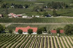 Vergers et vignes Photo stock