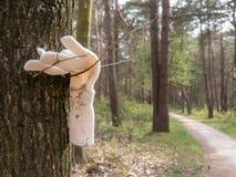Vergessener oder gelassener elfenbeinfarbener Handschuh und Weg im Waldland, Netz Stockfotos