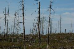 Vergessener Wald Stockfotos
