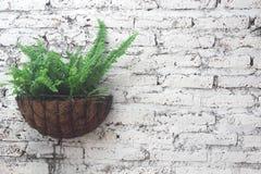 Vergipste weiße Wände des Farns Grün Lizenzfreies Stockbild