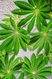 Vergipster Wandhintergrund mit exotischen Blättern Stockbild