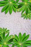 Vergipster Wandhintergrund mit exotischen Blättern Lizenzfreie Stockfotografie