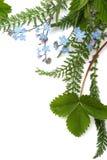 Vergissmeinnicht (Blumenverzierung lizenzfreie stockfotografie