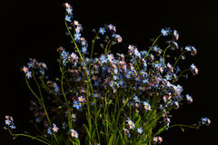 Vergissmeinnichtblau blüht Blumenstrauß Lizenzfreie Stockfotos